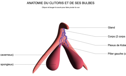 Clitoris: le grand retour